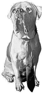 American Bulldog Mojo, Crux Creative's mascot.