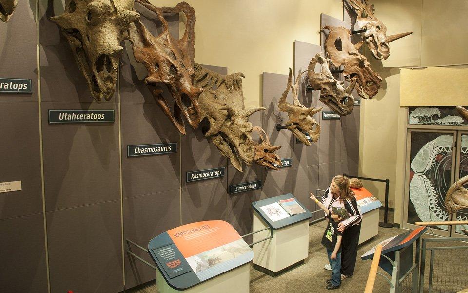 Burpee Museum Of Natural History Homer