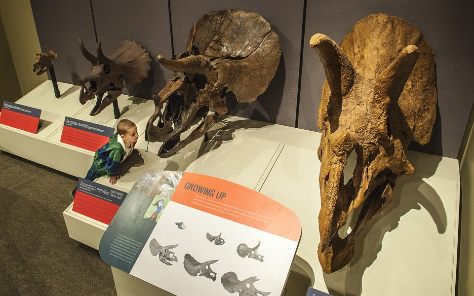 National Geographic Documentary To Feature Jane Rockford S Juvenile Tyrannosaurus Rex News Register Star Il